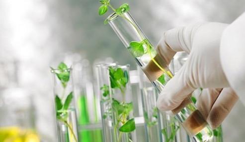 وبینار علمی  دارو درمانی ترکیبات کینونی موجود در گیاهان در انواع بیماری ها
